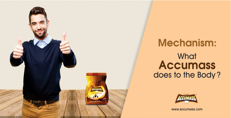 Mechanism-What-Accumass-does-to-the-body A